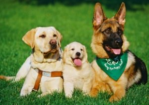Summit Library: Raising a Seeing Eye Puppy @ Summit Library