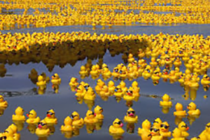 The 16th Annual Rubber Ducky Festival @ Passaic River Park
