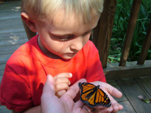 The Annual Butterfly Bonanza at Pyramid Mountain! @ Pyramid Mountain Visitors Center